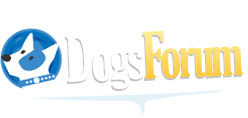 Dogs Forum